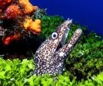 5 Star Diving Holiday in Cozumel